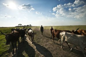 Prioritize value addition, farmers urged