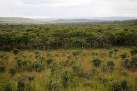 Government to restock Chibwe Forest