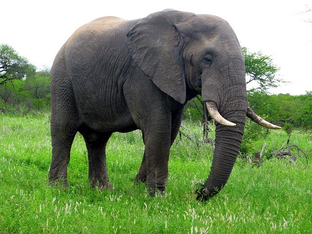 Elephant kills man in Mpika