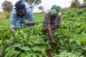 SMALL-SCALE FARMERS IMPRESS NUSFAZ