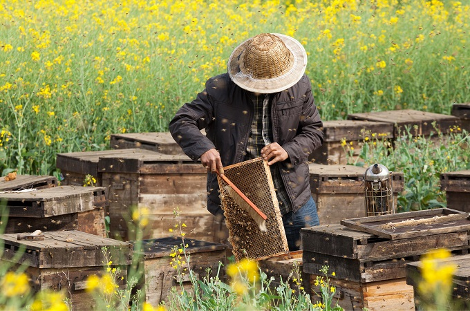 GOVT TO EMPOWER SMALL-SCALE HONEY FARMERS IN SERENJE