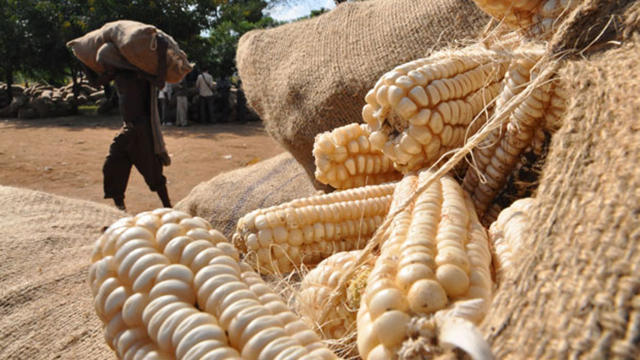 "Government says mealie-meal prices a ""Grave concern"""