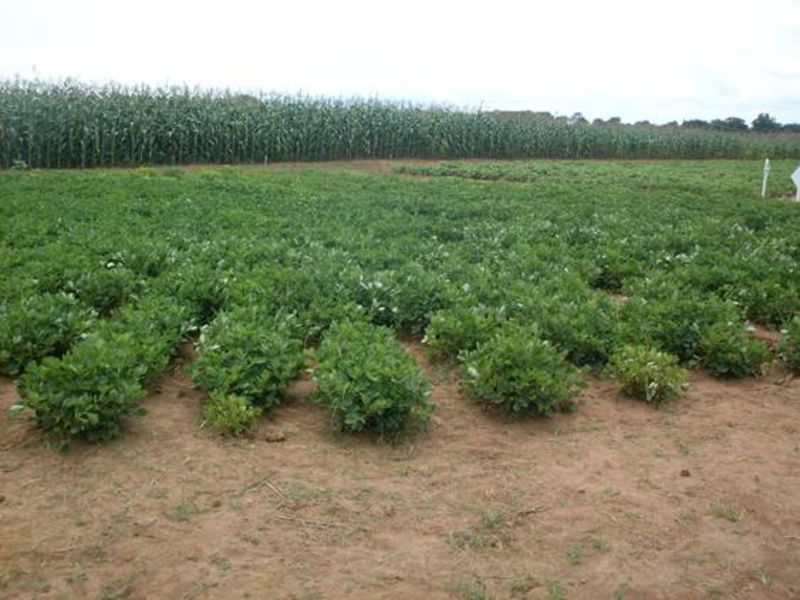 WHY FARMERS SHOULD ADOPT CROP DIVERSIFICATION THIS SEASON