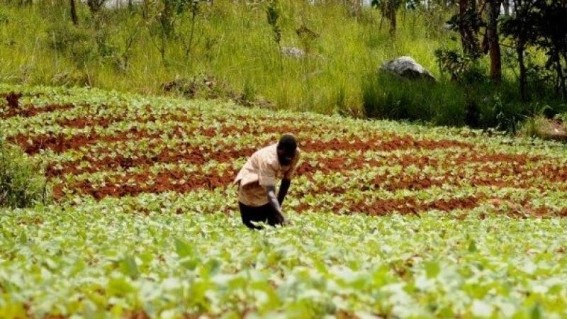 SAFADA TO ENGAGE FARMERS IN GROWING CLIMATE RESILIENT CROPS