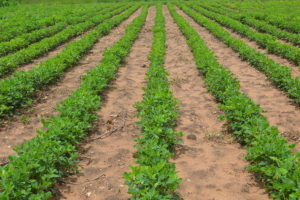 FQM PITCHES CONSERVATION FARMING TO LOCAL FARMERS